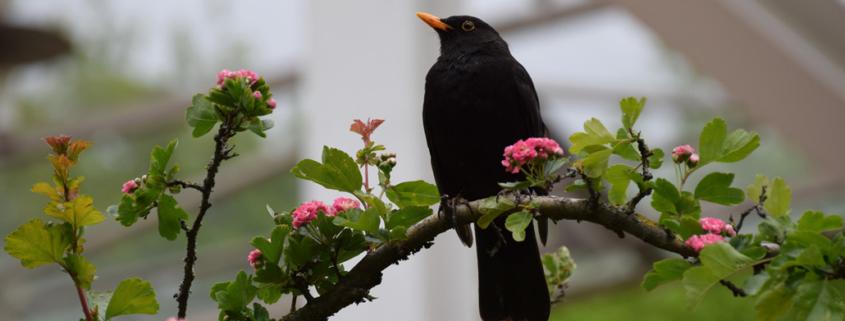 Der-fruehe-Vogel