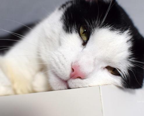 Sabine-Gimm-Katze