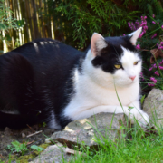 Kater Jake im Garten